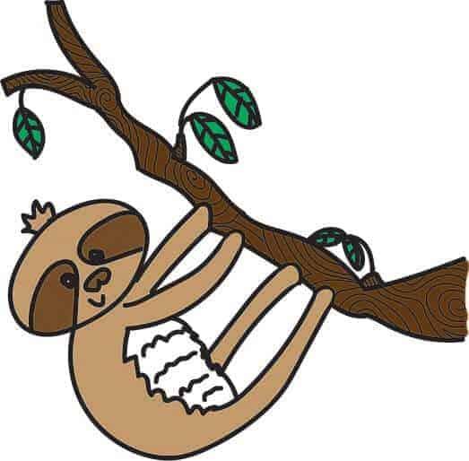 Sloth In Tree.jpg